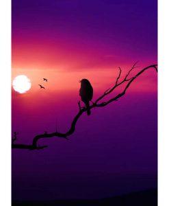 Opal Sunrise 9447 Vogelgezwitscher (Birdsong) 4-ply sock / glove knitting yarn